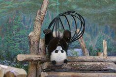 https://flic.kr/p/KZPoWo   Baby Panda VS Ball... Thing   @ Toronto Zoo