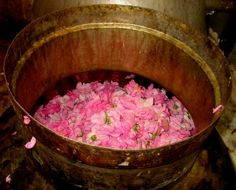 valentines day...february...create love...rose water~