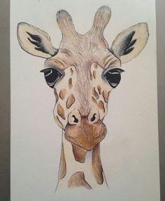 Giraf tekenen