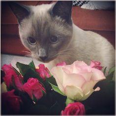 ♡•~•♡•~•♡•~•♡•~•♡ Happy Valentine's Day