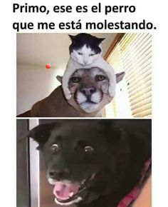 New memes humor animals ideas Funny Test, Funny Mom Memes, Funny Spanish Memes, Memes Funny Faces, New Memes, Funny Animal Memes, Love Memes, Funny Kids, Funny Animals