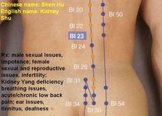 Billedresultat for bl 23 meridian acupuncture