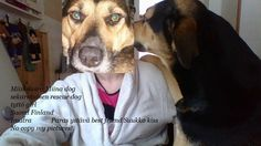 Copy Me, Rescue Dogs, Finland, Husky, Pictures, Animals, Fictional Characters, Photos, Animales