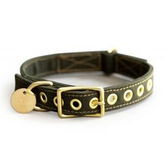 FOUND - Olive Canvas Collar with Brass Fittings available at www.ZoePetSupply.com
