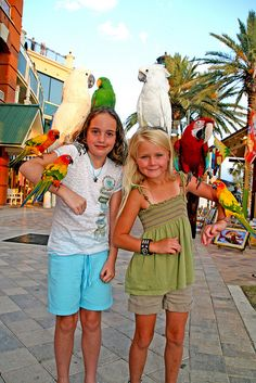 HarborWalk Village...everybody LOVES the beautiful birds:)