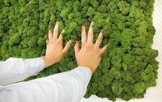 Natürliche Mooswände Evergreen - Freund GmbH