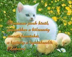 Szép, kedves idézetek, jókívánságok, szép képek: Mindazon javak közül, amelyekben a bölcsesség.... Optimism, Animals, Friends, Bite Size, Amigos, Animales, Animaux, Animal, Animais