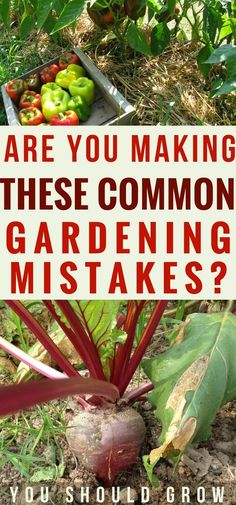 Organic Gardening Frustrated with your gardening efforts? This list of the 10 most common gardening mistakes that cause gardens to fail will help you figure out what you're doing wrong. Read the article to find out what they are and how to fix them. Growing Tomatoes, Growing Vegetables, Growing Plants, Organic Insecticide, Backyard Vegetable Gardens, Hydroponic Gardening, Hydroponics Setup, Gardening Hacks, Indoor Gardening