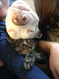 It's a one-sided love - MegaCutie - Mega Cute Photos, Cute Pets, Cute Dog Pics
