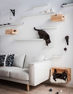 Cats Two cats on homemade cat shelves from IKEA MOSSLANDA Picture frames in white at different distances and heights on the wall behind a sofa Capture. Diy Cat Shelves, Cat Walkway, Cat Climbing Wall, Cat Playground, Animal Room, Cat Room, Cat Decor, Affordable Home Decor, Cat Furniture