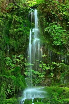 Rain forrest waterfall...