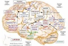 Image result for map of the brain and its functions