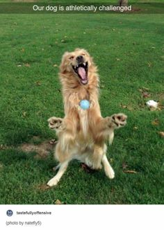 Tmw you identify with a dogs athletic skills for the first time ever