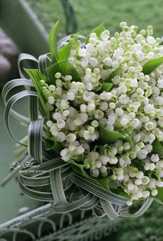 Lily of the valley - Muguet Romantic Flowers, May Flowers, White Flowers, Beautiful Flowers, Wedding Flowers, Bride Bouquets, Floral Bouquets, Spring Blooms, Spring Flowers