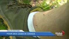 WHO declares Zika virus an international emergency | Globalnews.ca