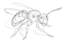Lesson 4: Drawing Insects and Arachnids