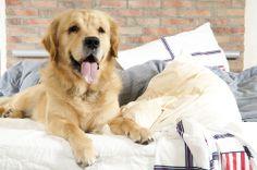 Seu cão acha que manda em casa? Conheça um pouco mais sobre comportamento dominante e veja como agir