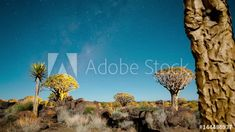 Stock Video of Linear and pan timelapse in a quiver tree forest at night against a starry sky in a moonlit landscape as the moon sets with the Milky Way and shadows passing through available on request. at Adobe Stock Night Forest, Tree Forest, Moon Setting, Quiver, Milky Way, Stars And Moon, Stock Video, Stock Footage, Shadows