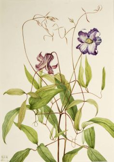1000+ images about Vintage flowers, herbs and medicinal plants on Pinterest | Botanical prints ...