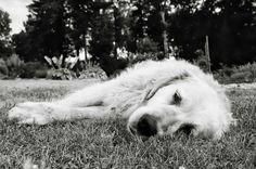 Lazy dog in my garden