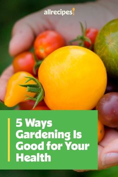 "5 Ways Gardening Is Good for Your Health | ""Dedicating time to cultivate your garden — whether that's indoors, in your yard, or in a community plot — has obvious benefits like vases full of flowers and bowls full of tomatoes. But what about the ""invisible"" perks that you can't eat or smell? Longtime gardeners have known this secret forever: Gardening is good for the soul."" #healthyrecipes #healthycookingideas #dietrecipes #healthyfoods #lightrecipes #weightlossrecipes #weightlossfood Low Calorie Recipes, Healthy Recipes, Benefits Of Gardening, For Your Health, Light Recipes, Healthy Cooking, 5 Ways, Allrecipes, Health Benefits"