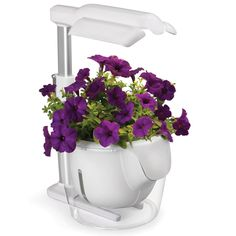 The Superior Self Sustaining Indoor Garden - for growing basil/cillantro in  the kitchen!