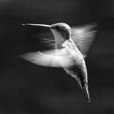 .oiseau