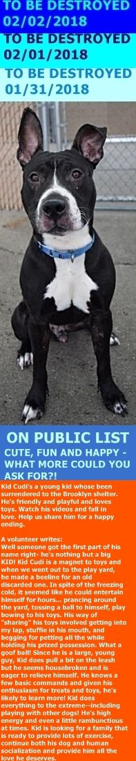 SAFE 2-3-2018 by Pet Adoption League of NY --- Hello, my name is Kid Cudi . My animal id is #16537. I am a desexed male charcoal dog at the Brooklyn Animal Care Center. The shelter thinks I am about 2 years 1 months 1 weeks old.  I came into the shelter as a stray on 20-Dec-2017. http://nycdogs.urgentpodr.org/kid-cudi-16537/