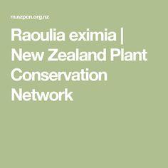 Raoulia eximia | New Zealand Plant Conservation Network