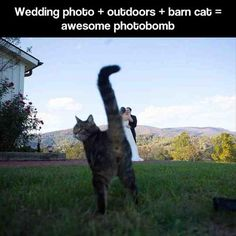 Funny Pictures Of The Day � 74 Pics