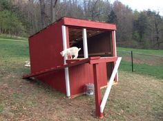 Red goat barn with a ramp going