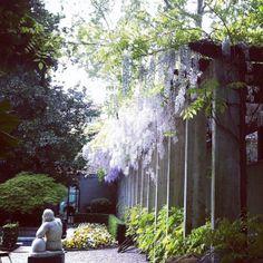 Gardens #Milano #piccolamilano Milan, Gardens, Plants, Pictures, Photos, Photo Illustration, Garden, Plant, Garden Types