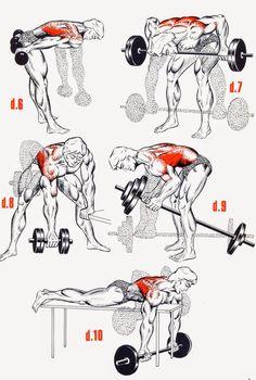 Comment Muscler chaque partie du corps : Explication Par Image - Sports et Santé
