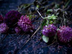 dried flowers © julie ansiau