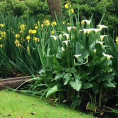 En el jardin: últimos retoques en los canteros...!