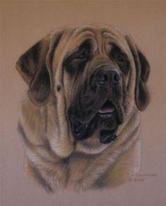 #Mastiff.   #dogs