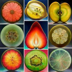 cross sections of fruits