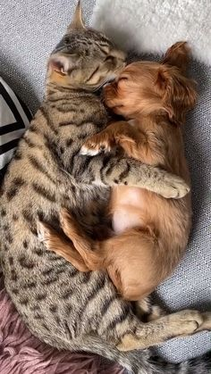 Loving Cat Licks And Snuggles With Sleeping Puppy 😍😋 - Funny Animals - Puppies Cute Animal Videos, Cute Animal Pictures, Baby Pictures, Cute Little Animals, Cute Funny Animals, Cat And Dog Videos, Sleeping Puppies, Funny Cats And Dogs, Funny Kittens
