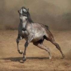 Stunning Horse Photography | 28. A Purebred Arabian horse is one which appears in any purebred ...