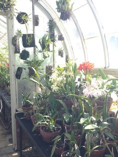 Magical greenhouse in winter, mount holyoke