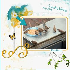 Here my Aug. 2016 Lucky birds lo made with the loving HSA_WDCT 1-2- thanks Eileen for a loving kit again. shop link - http://forums.mymemories.com/post/new-wishes-do-come-true-and-matching-blogtrain-on-my-blog-8211966 font- Writing stuff and Verdana pict. my own about lots of birds enjoying bread .  it was a bit wet by some rain but better to eat huh ? and they enjoyed it a lot. shadowed a bit