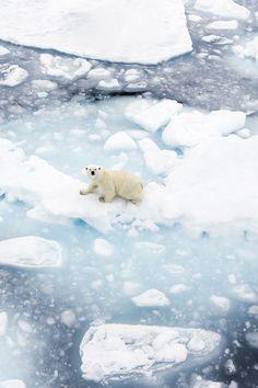 http://evanot.tumblr.com/post/80607535809/wolverxne-polar-bear-by-pilapix