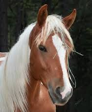Image result for horses that shine like gold