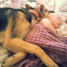 A German Shepherd watching and snuggling with the family baby while it sleeps. These dogs are great family dogs!