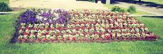 Flowers at UMC.