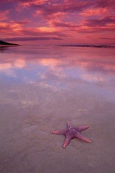 Starfish by Peter Lik (Fraser Island, Queensland) Beautiful Sunset, Beautiful Beaches, Beautiful World, Peter Lik Photography, Nature Photography, Landscape Photography, Fraser Island, Honeymoon Places, Ocean Beach