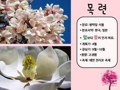 봄 활동자료 봄에 피는 꽃 PPT : 네이버 블로그 Letter Board, Lettering, Blog, Drawing Letters, Blogging, Brush Lettering