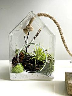 Air Plant Terrarium Glass Vase Living Decor DIY Kit Gift For Any - Amazing diy non living terrarium