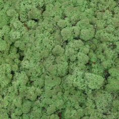 Verde Profilo MOSSdesign - Colours - GREEN PEPPER #verdeprofilo #mossdesign #moss #lichen #colours #greenpepper #nuance