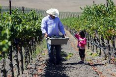 Amazing stories of Mexican-American winemakers on the rise in CA (fabulous wines, I've tasted many!) via NYTimes.com